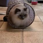 Manik in 't Oirschots Kattenpension