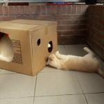 Mac in 't Oirschots Kattenpension